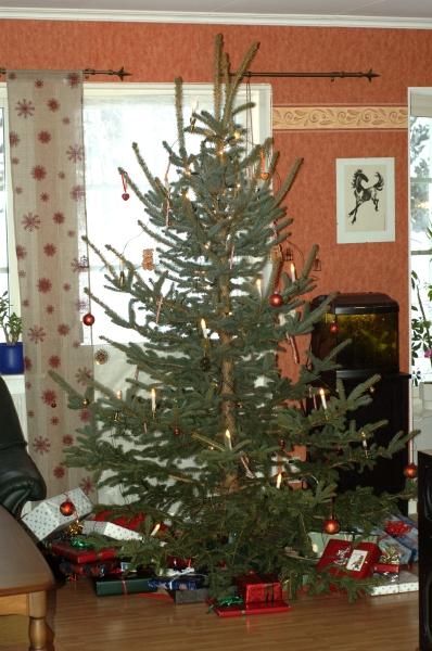 Vår julgran 2010
