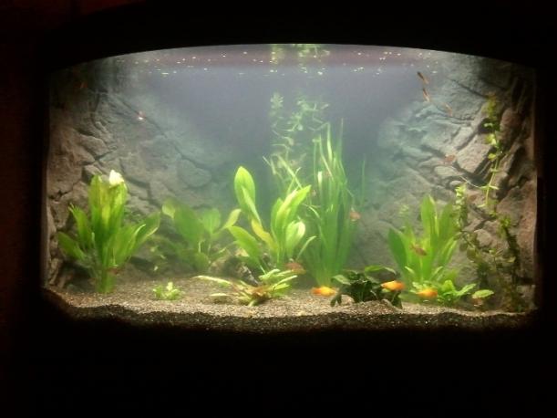 Akvariet några dagar efter uppstarten