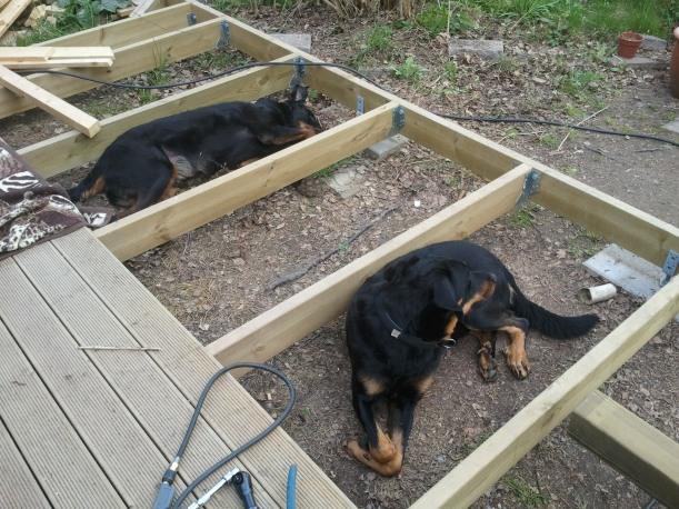 Det är något speciellt med facken mellan altanbjälkarna... hundarna älskar att ligga där!