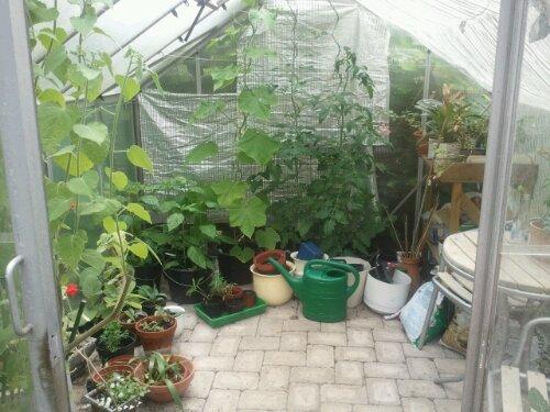Växthuset lite mer städat och i ordning