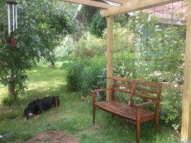 Pergola i ingång till ena delen av trädgården