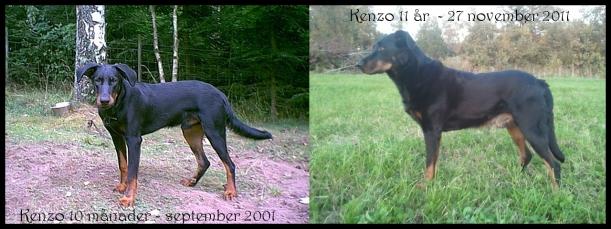 Kenzo 11 år