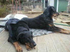 Kenzo och kusinen Chili slappar på altanen