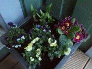wpid-2012-03-18-17.47.53.jpg