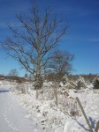Vinter igen...