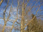 Boll i träd