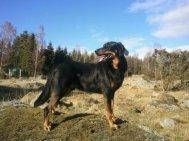 Snygg-Gari i mars 2012/Handsome Garibaldi, march 2012
