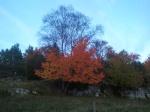 En del träd sticker verkligen ut med sin färg