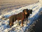 Chili och Sigge på promenad i ljuvligt vinterväder