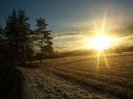 Solen är på väg ner bakom träden