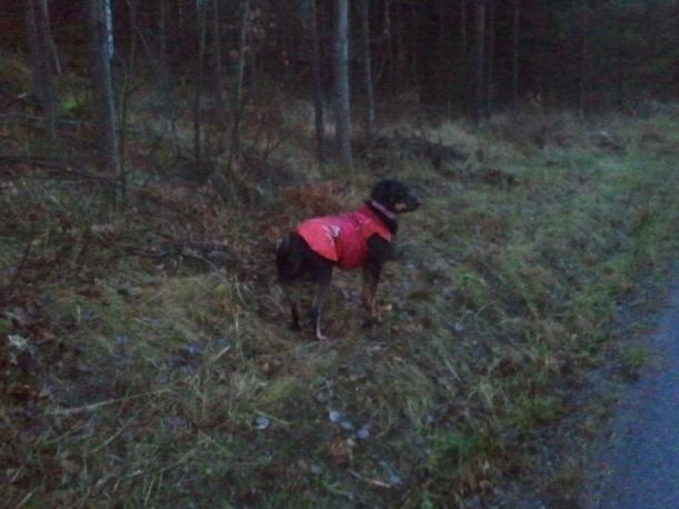 Snygg-Baldi i regntäcke