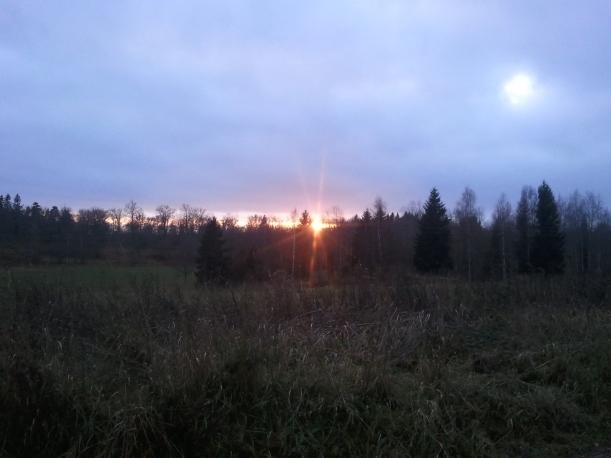 En mulen tisdag i november, solen tittar fram precis när den försvinner bakom träden