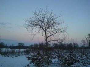 Vacker vinterkväll