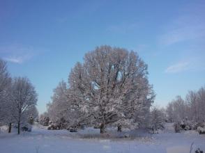 Stiliga snötyngda ekar har vi gott om