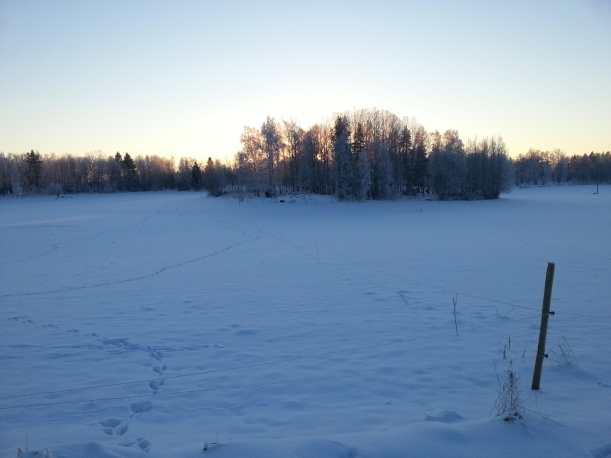Många spår i snön