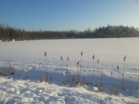 Många spår på fältet, bland annat efter hund med lekryck... ;)