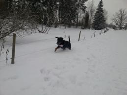 Sigge röjer i snön