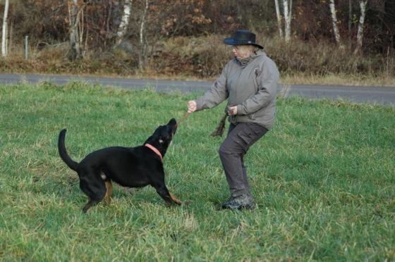 Kamplek uppskattas av många hundar