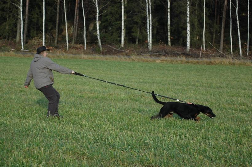 Så här vill man ju helst inte ha det när man går på promenad med kopplad hund...