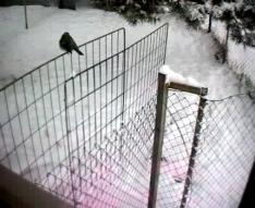 Annat djur i/på hundgården
