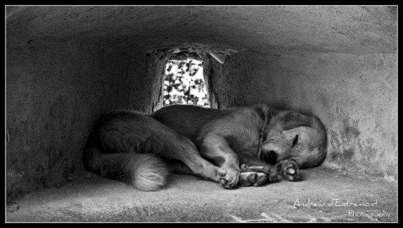 En hund har sökt skydd