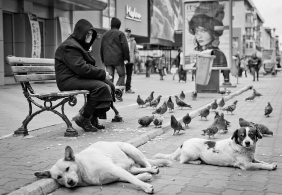 Gatuhundar i Rumänien