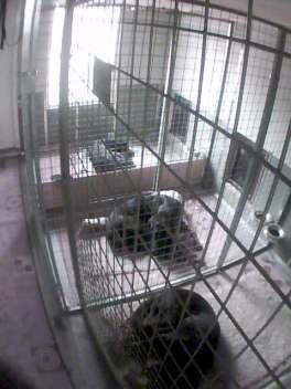Tre sovande hundar i hundhuset