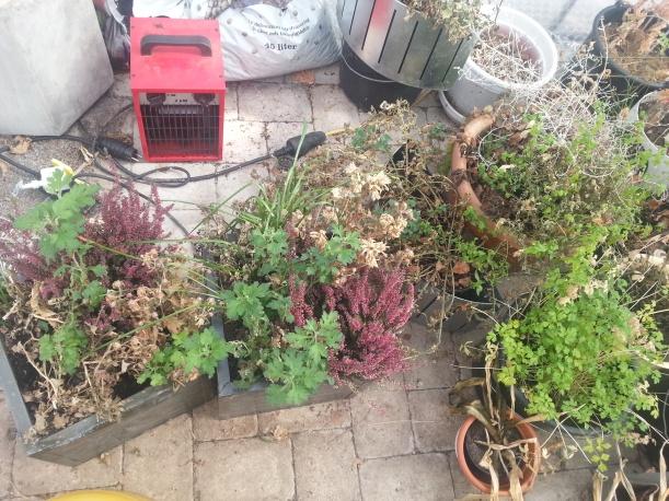 Det börjar växa bra i växthuset nu!