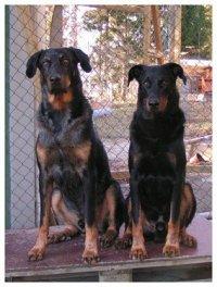 Chili och Kenzo hösten 2005