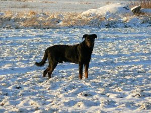 Kenzo, vintern 2006/2007