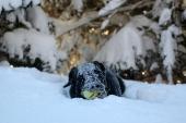 Snö och en boll - lycka för Sigge
