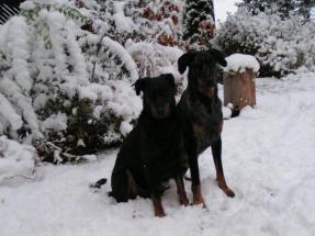 Två unga hundar, Kenzo och Chili