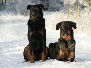 Kenzo och Chili, 2003 eller 2004