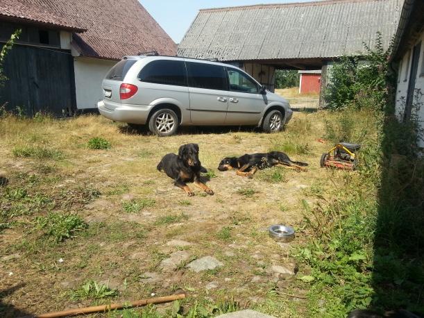 Innergården samt nya hundbilen