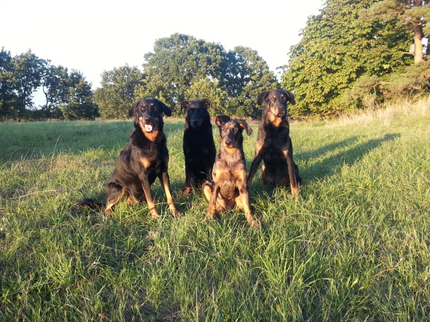 Fyra av mina fem fina pojkar