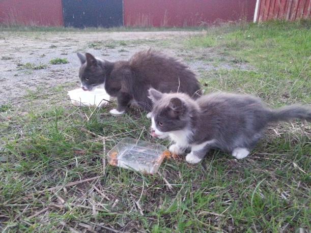 Mamma och unge, fortfarande väldigt hungriga trots regelbunden (två gånger om dagen) utfodring...