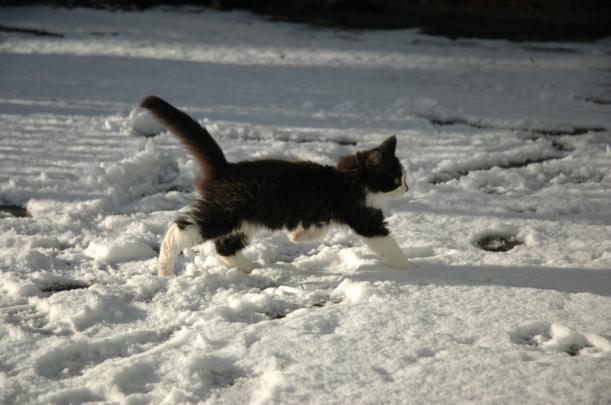 Torsten i november 2007, då var han 3 månader och fick testa att gå ut i snö första gången....