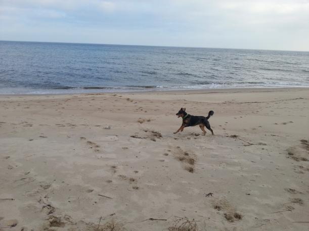 Indigo på stranden