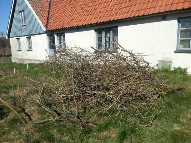 Mängder med syrener och plommon bortrensade