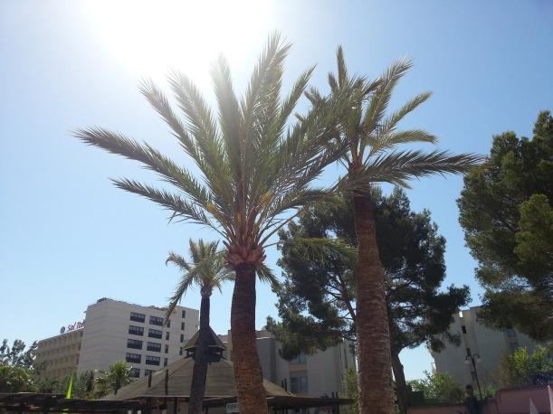 Man vet att man är på semester när man tittar upp och ser palmer istället för björkar och ekar. ;)