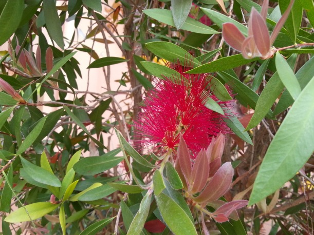 En annorlunda och vacker blomma på hotellområdet