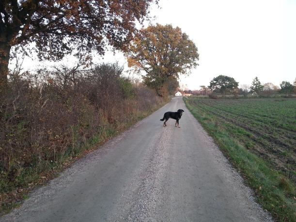 På promenad med Garibaldi