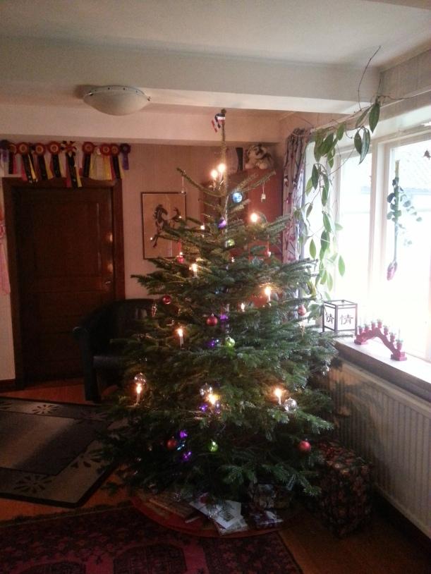 Vår julgran 2014