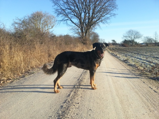 Indi och jag ute på promenad i fint vinterväder