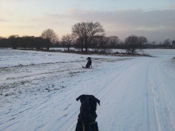 En av de få riktiga vinterdagarna vi haft hittills