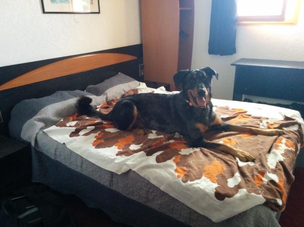 Indi testar sängen i vårt rum