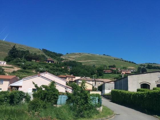 Mer vingårdar