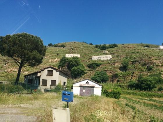 och lite mer vingårdar....