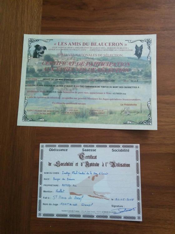 Diplom för Indis deltagande på själva utställningen samt underst för CSAU