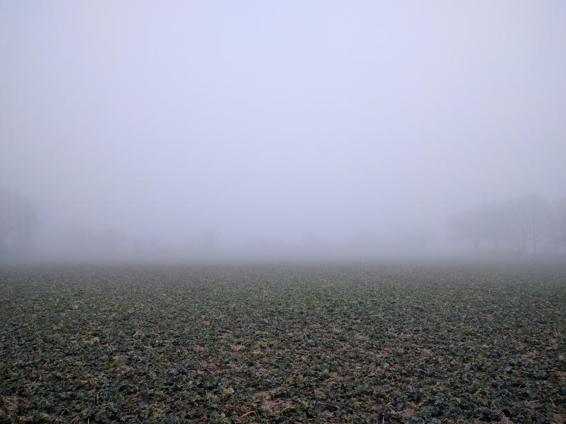 Man ser verkligen inte långt när det är så här dimmigt.